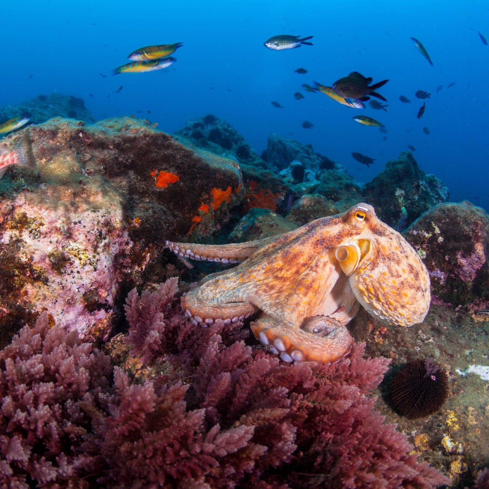Tintenfische - Wunder der Evolution
