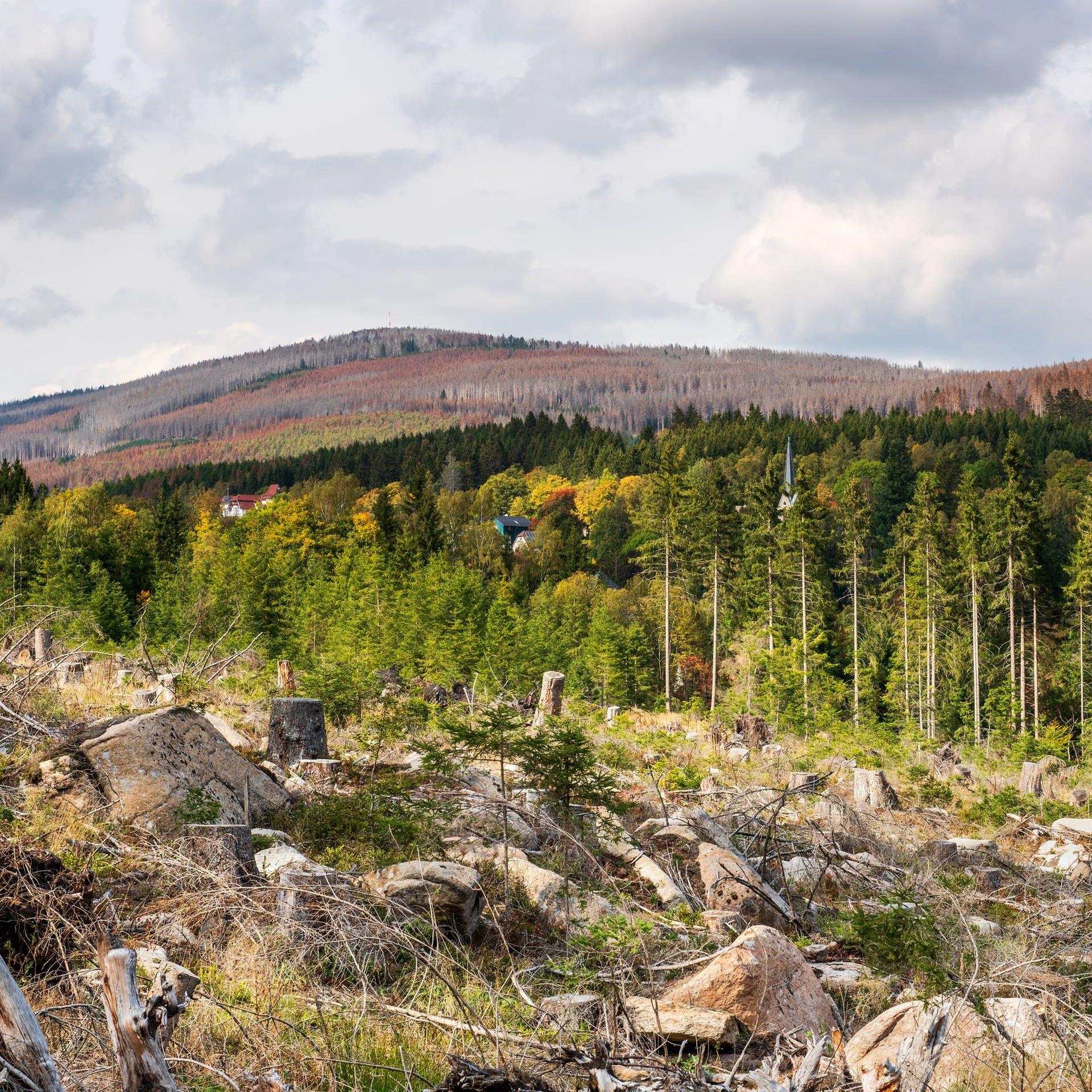 Bäume in Not – Strategien für Städte und Wälder