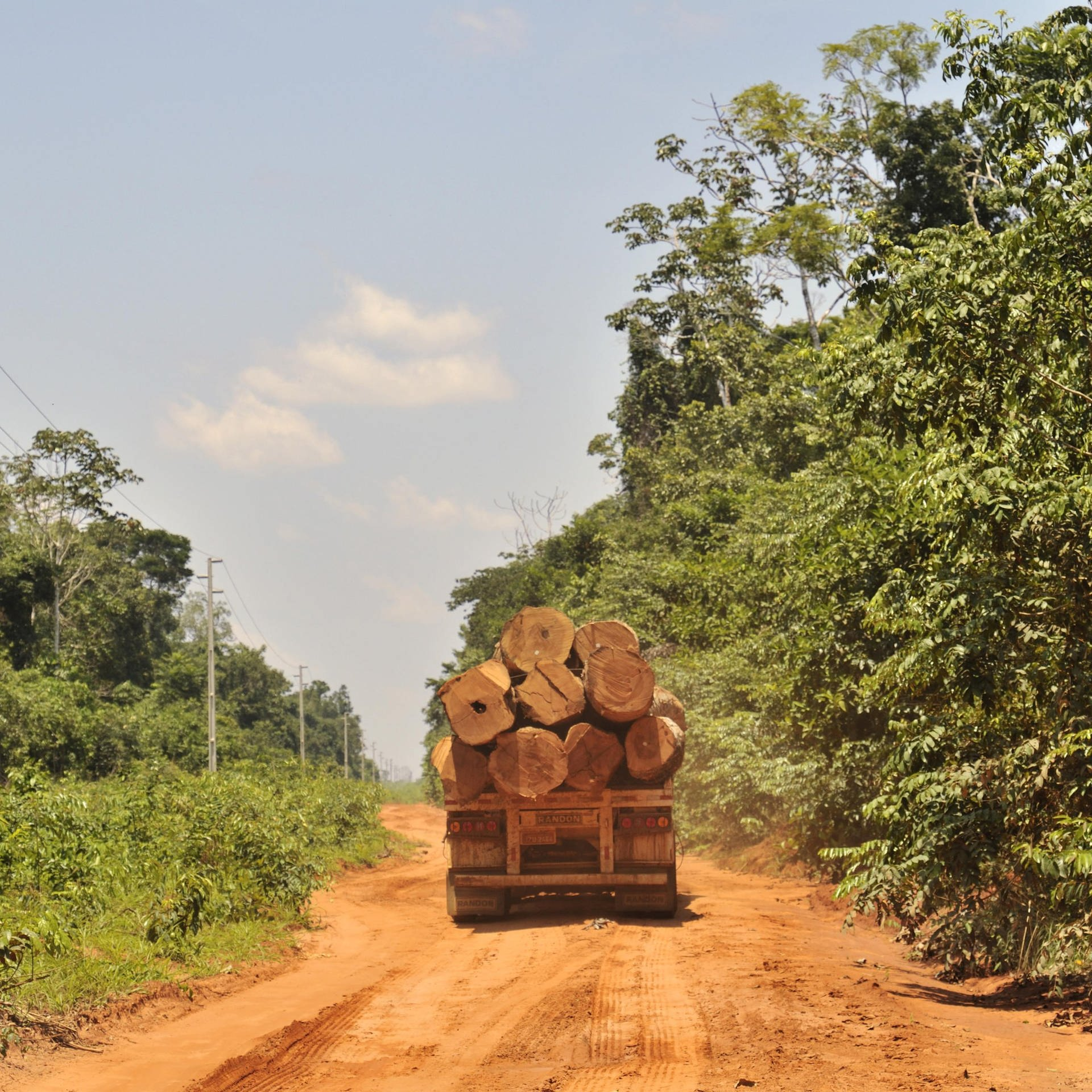Der Kampf gegen illegalen Holzhandel