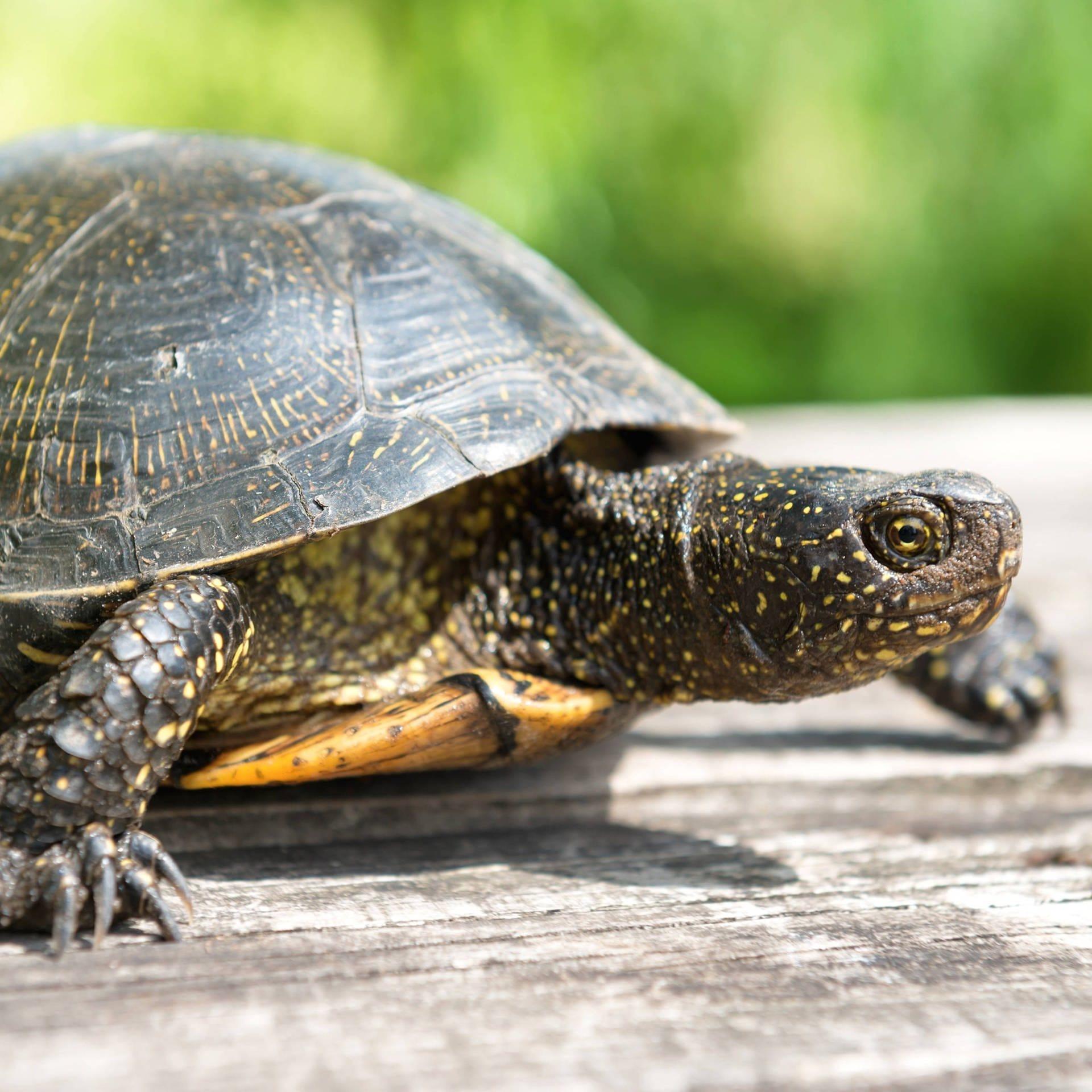 Schildkröten-Geschichten – Literatur der Langsamkeit