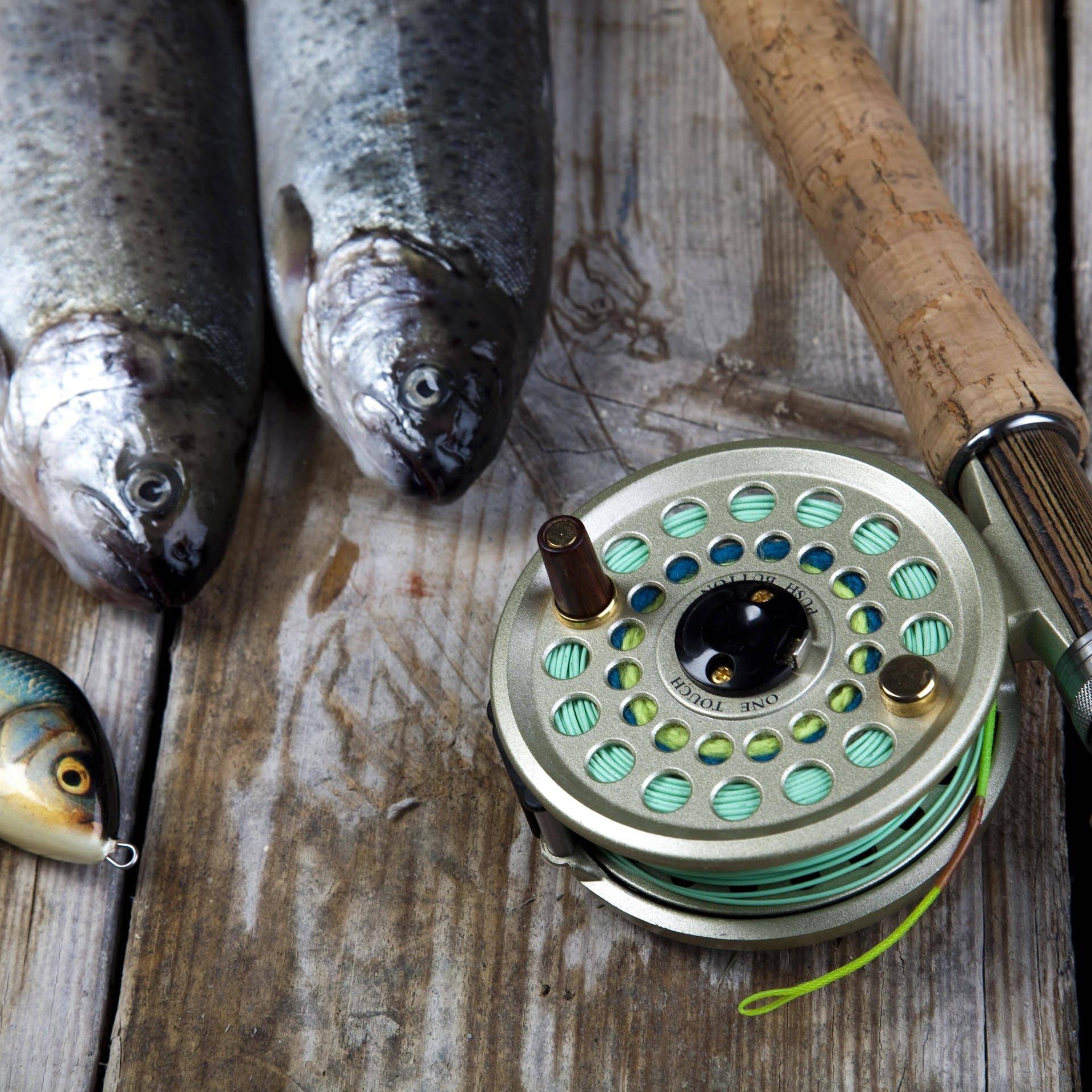 Überfischung durch Freizeitangler - Schutz für Hecht, Dorsch und Aal