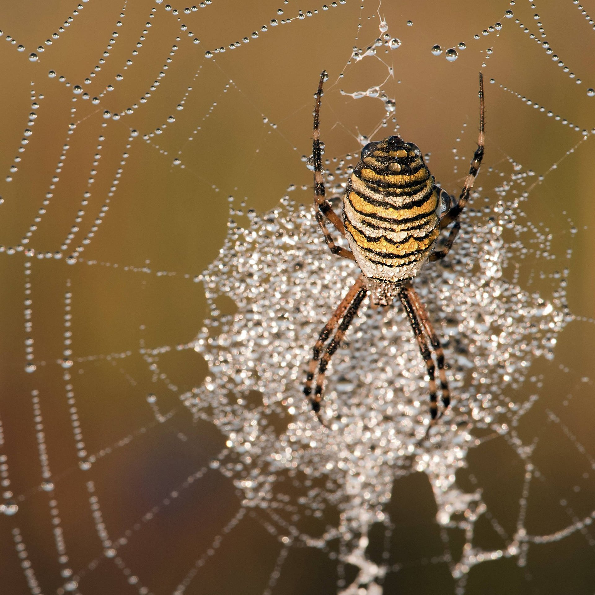 Herz aus Spinnenseide – Medizinischer Fortschritt am Faden
