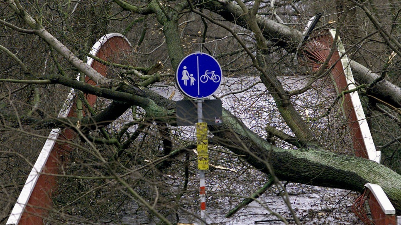 Durch umgestürzte Bäume ist diese Brücke in Karlsruhe am 26.12.1999 völlig unpassierbar geworden. Mehr als 100 Menschen starben in Frankreich, Deutschland und der Schweiz durch das Orkantief Lothar;  die meisten durch umfallende Bäume. (Foto: dpa Bildfunk, (c) dpa)
