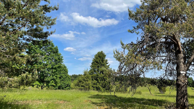 Die Stille kann man ganzjährig hier auf der Hochfläche genießen. Besonders beeindruckend sind die alten Solitärbäume.