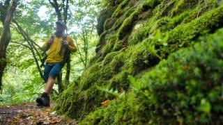 Wanderer wandert durch den Wald (Foto: SWR, Stefan Nink)