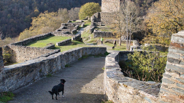 Wanderung auf der Hahnenbachtaltour im Hunsrück: Besucher mit Hund auf der Burgruine Schmidtburg (Foto: SWR, Stefan Nink)