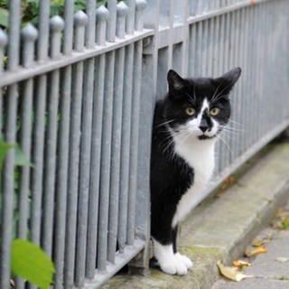 Geschätzt zwei Millionen streunende Katzen leben in Deutschland (Foto: picture-alliance / Reportdienste, Picture Alliance)