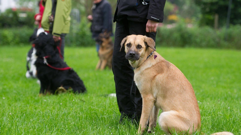 Teilnehmer an der Ausbildung zum Hundeführerschein (Foto: dpa Bildfunk, picture alliance / dpa | Sebastian Kahnert)