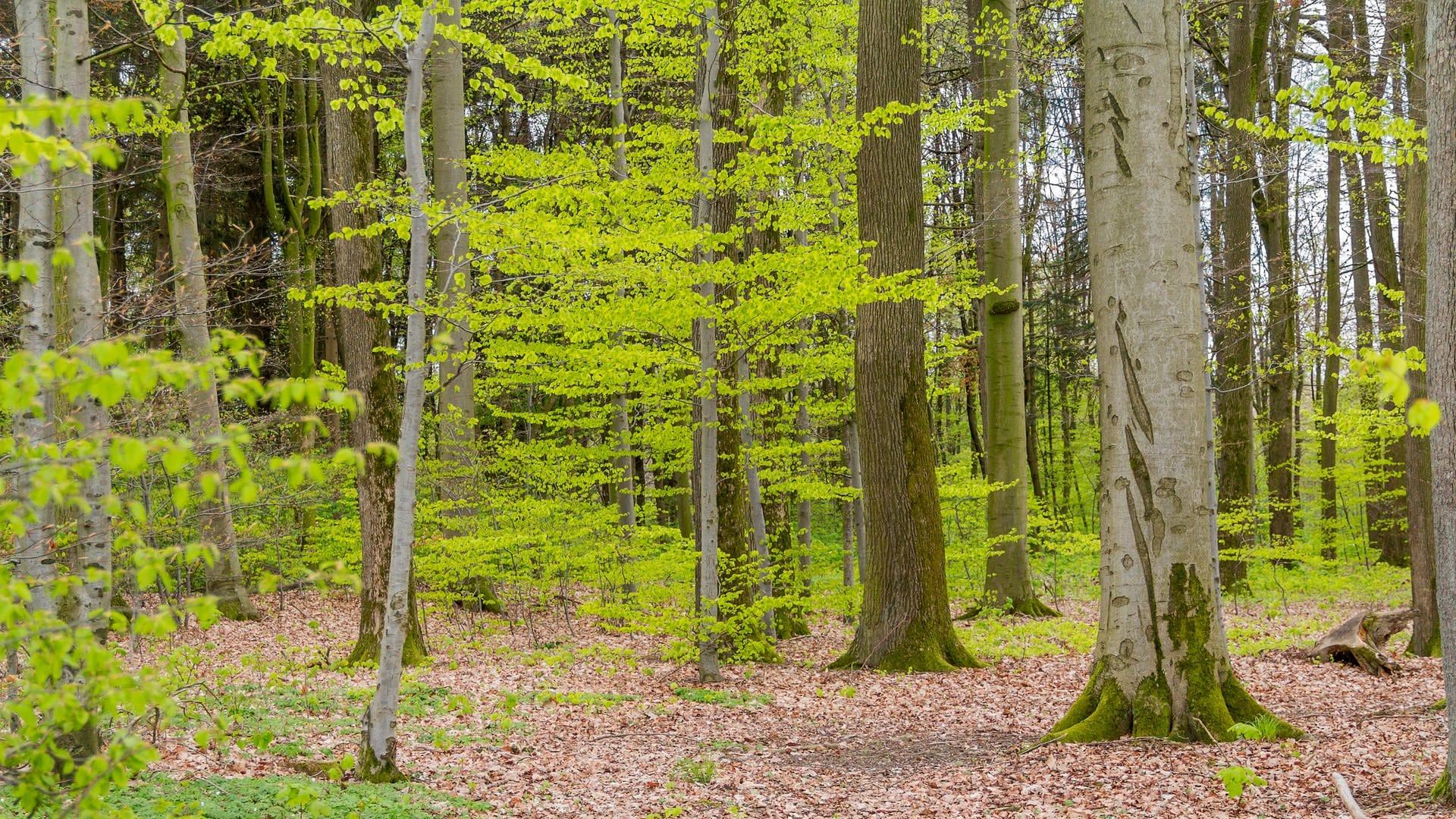 Bäume in einem Wald mit lichten Stellen