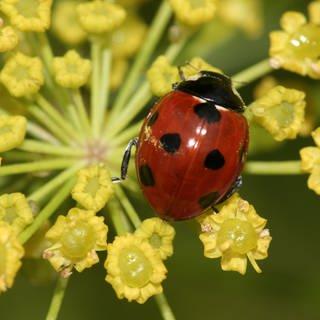 Bilder vom Naturschutzbund NABU zum Insektensommer (Foto: Pressestelle, Nabu / Helge May)