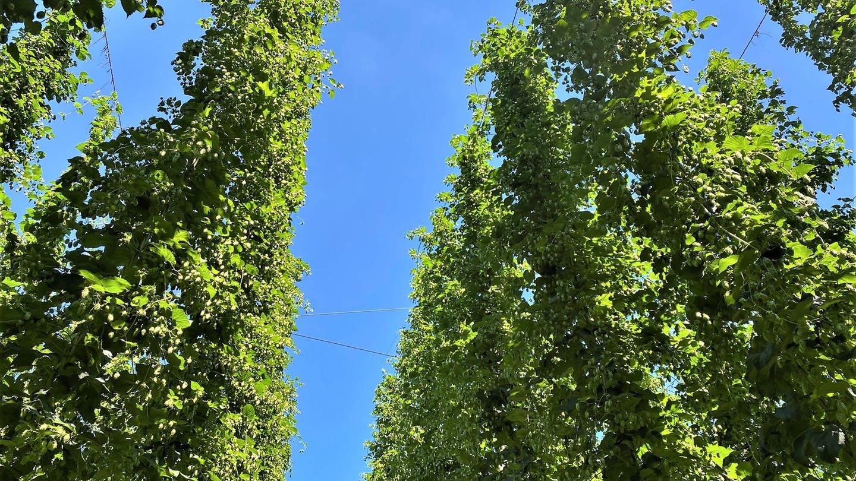 Hopfen- und Obsthof Wagner in Dieglishofen (Foto: SWR, Marion Kynaß)
