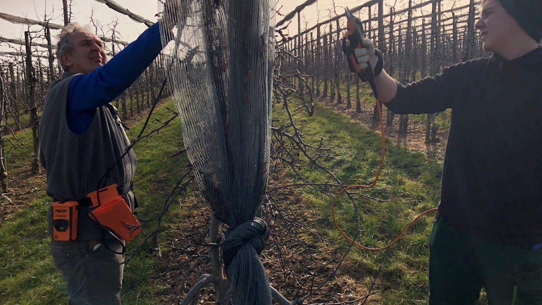 Apfelbäume werden geschnitten - bei Hubert Knoblauch in Berg (Foto: SWR, Moritz Kluthe)