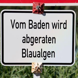 Schild: Vom Baden wird abgeraten: Blaualgen (Foto: dpa Bildfunk, Julian Stratenschulte)