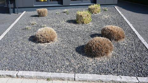 Pflanzen ragen aus einem Vorgarten mit grauen und schwarzen Kieselsteinen.  (Foto: dpa Bildfunk, picture alliance/Carmen Jaspersen/dpa)