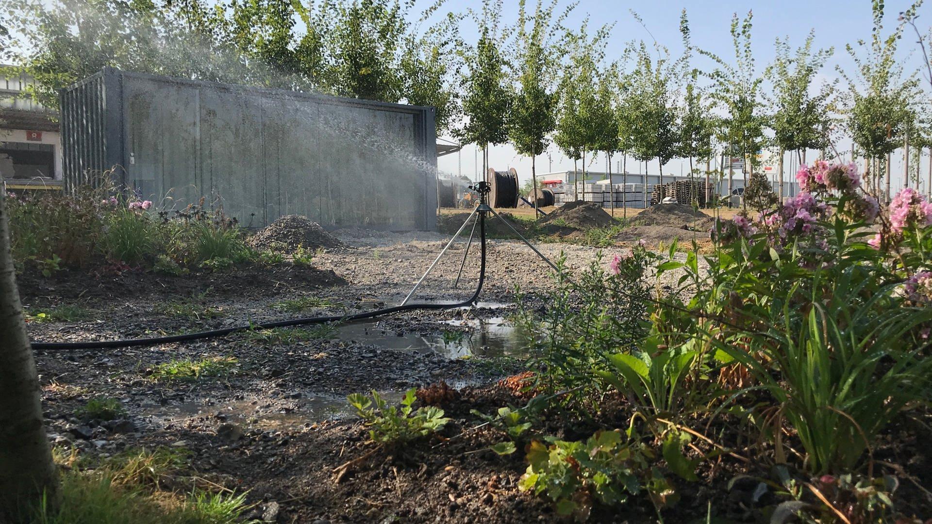 Bewässerung auf dem BuGa Gelände in Heilbronn August 2018 Hitzesommer
