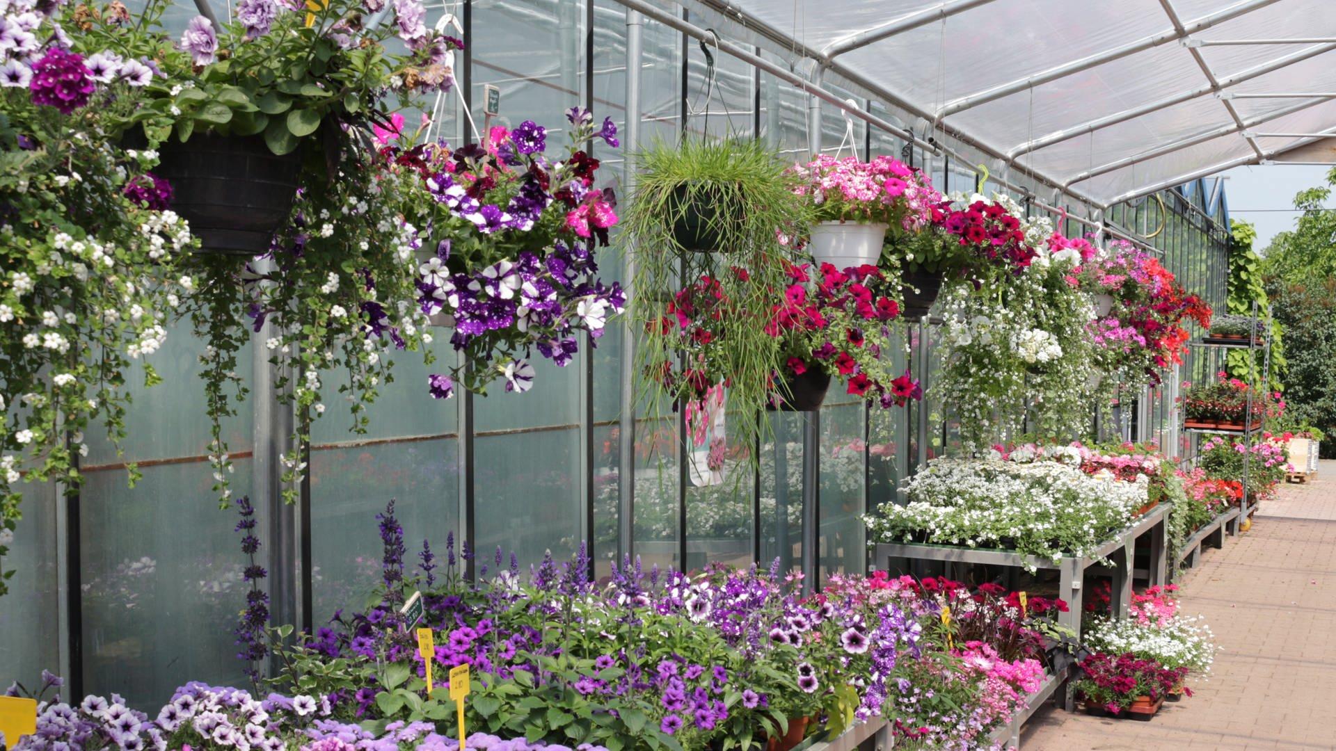 Blumenampeln in der Gärtnerei Umbach