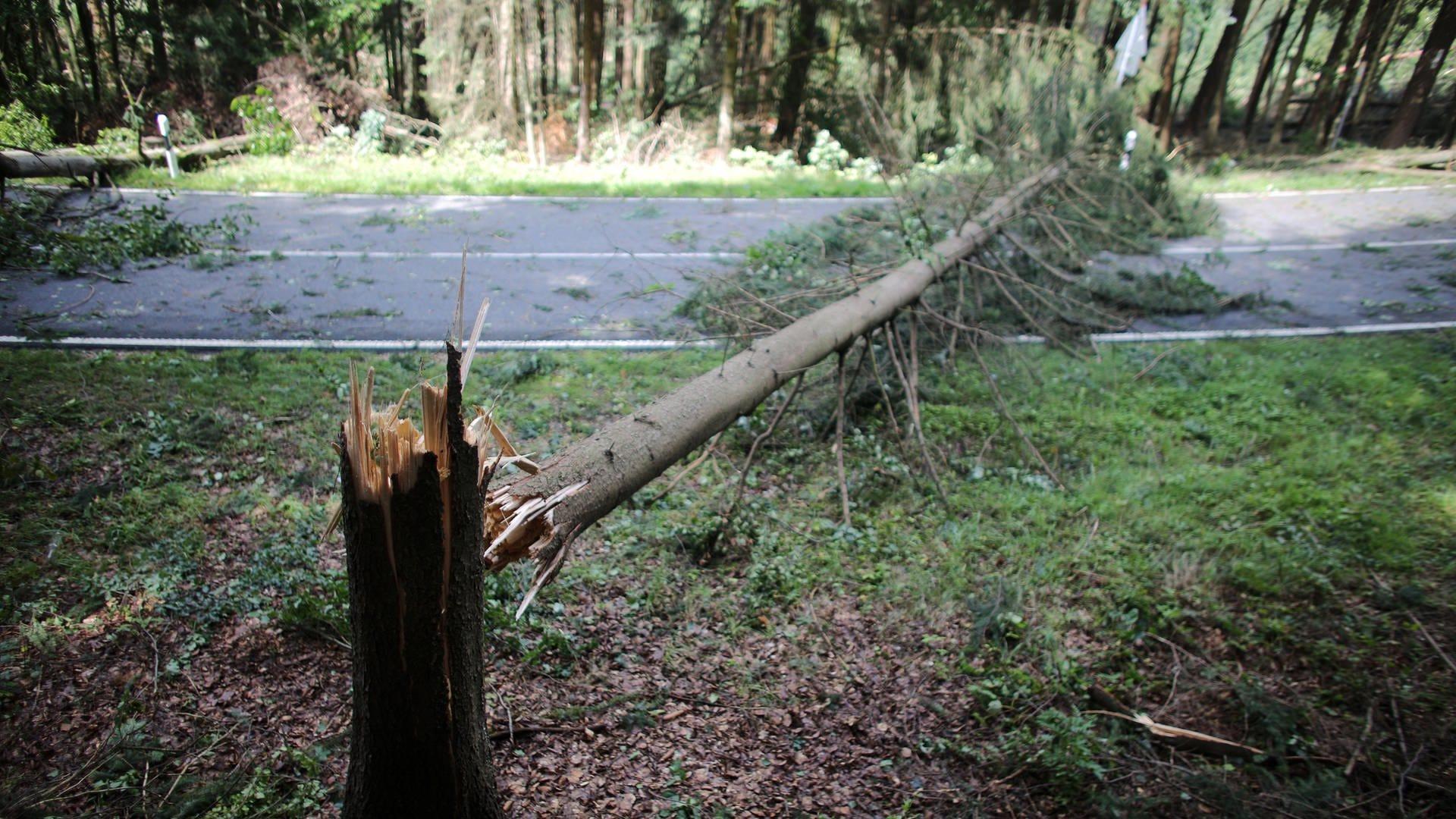 Ein umgestürzter Baum nach einem Sturm liegt auf einer Straße im Wald