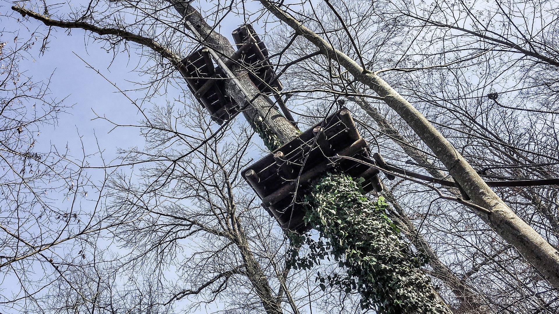 Der Waldkletterpark in Langenburg - Bäume ragen gen Himmel