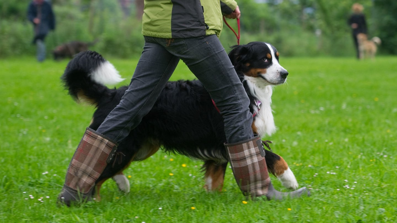 Besitzer und Hund beim Training zum Hundeführerschein (Foto: picture-alliance / Reportdienste, picture alliance / Sebastian Kahnert/dpa)