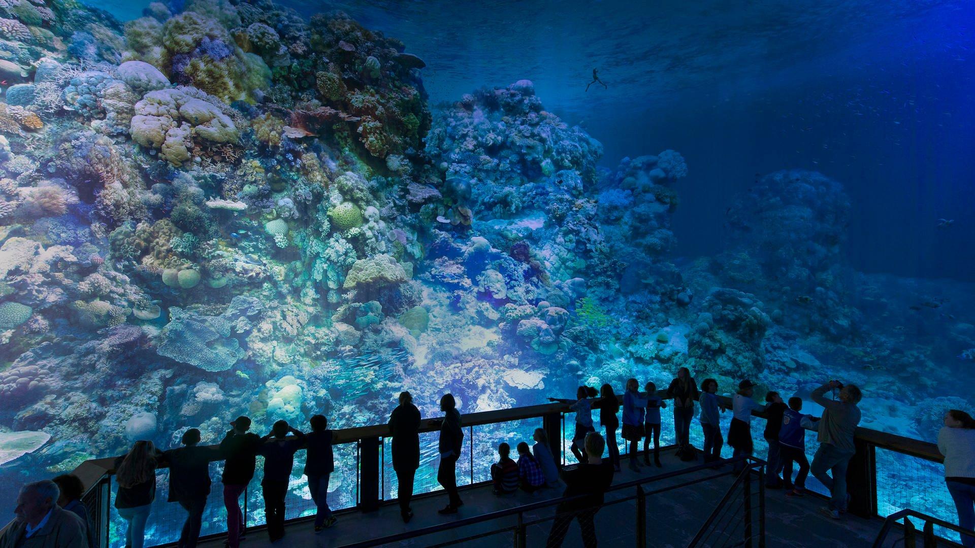 Great Barrier Reef demnächst im Gasometer
