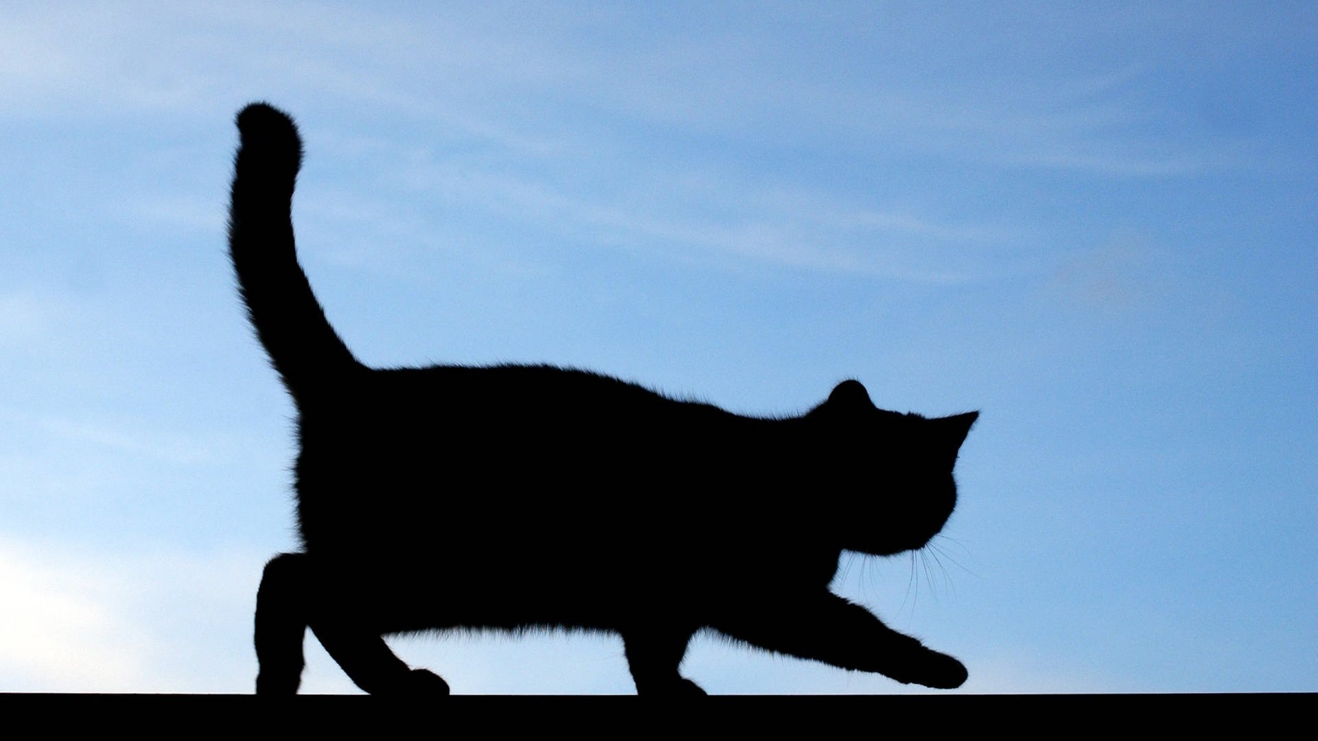 Katze mit Säure übergossen