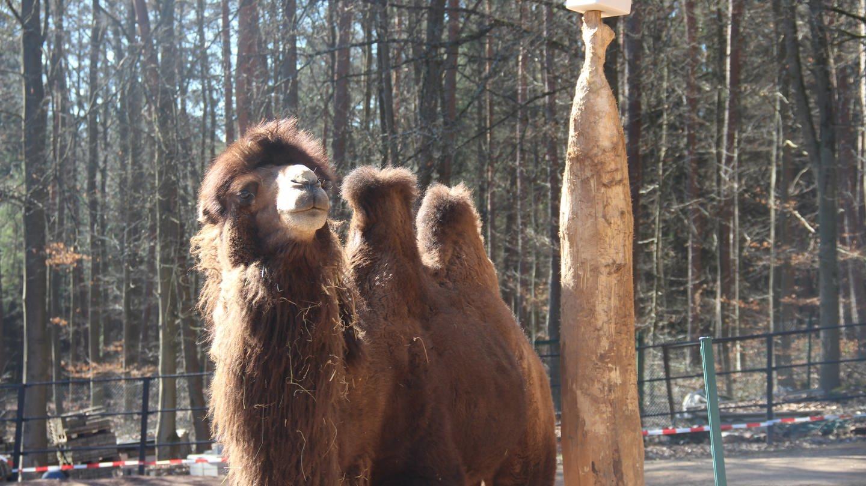Gibt es doch Rettung für den Zoo Kaiserslautern?