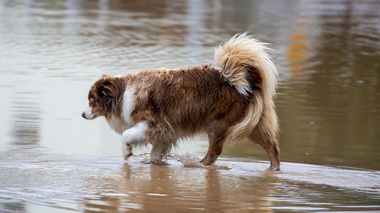 Viele Tieren haben bei den verheerenden Überschwemmungen in Rheinland-Pfalz ihre Besitzer verloren.