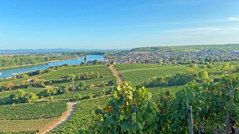 Blick über die Weinberge nach Nierstein (Foto: SWR, D. Diener)