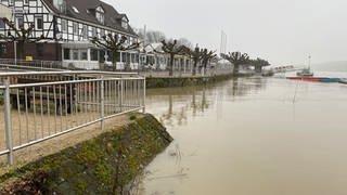 Überflutete Promenade in Worms (Foto: SWR, Sebastian Grom)