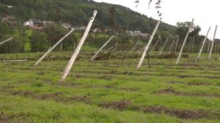 Holsthum: Das Hochwasser hat Masten, Drähte und Hopfenpflanzen vollständig zerstört (Foto: SWR)