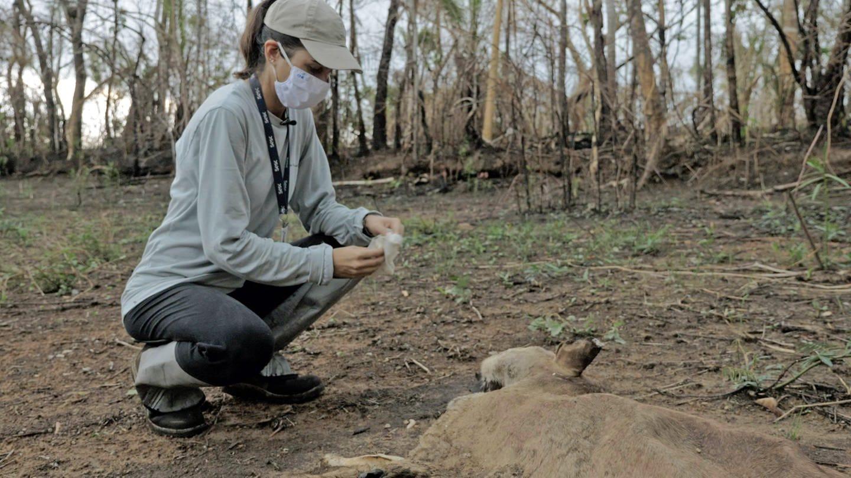 Cristina Cuiabália Neves (Biologin und Managerin im Naturreservat Sesc Pantanal in Mato Grosso, Brasilien) erfasst den Verlust an Tieren nach der letzten Brandsaison. © SWR (Foto: SWR)