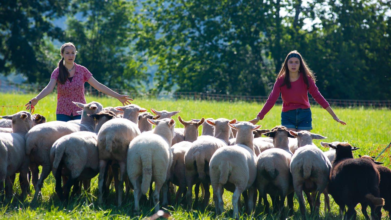 Paulina (Tabea Hug) und Leo (Phillis Lara Lau) müssen die Schafe mit Händen und Füßen wieder eintreiben. © SWR/Maria Wiesler (Foto: SWR, Maria Wiesler)
