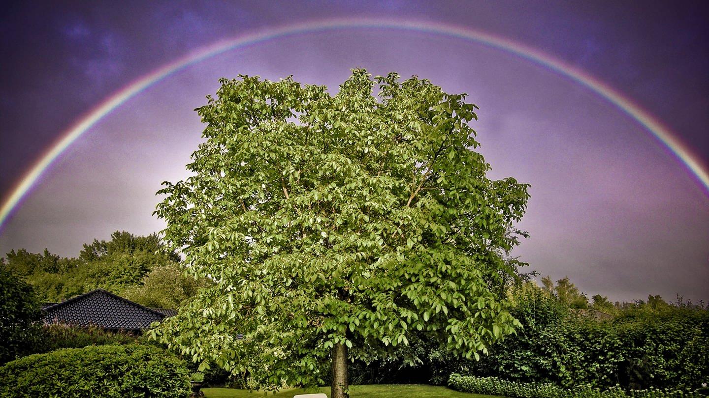 Regenbogen (Foto: Colourbox)