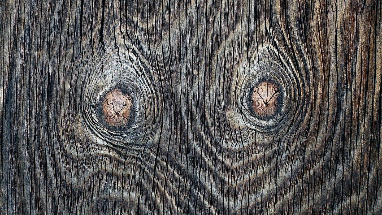 Holzmaserung in einem Brett (Foto: Imago, imago/Steinach)