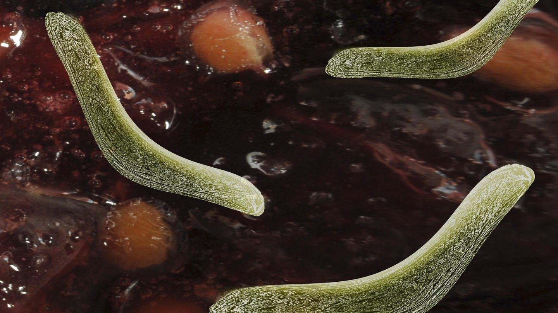 Bakterien im Darm (Foto: picture-alliance / Reportdienste, picture alliance/imageBROKER)