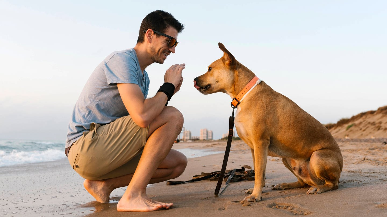 Mann mit Hund am Strand: Hunde mögen es nicht, wenn man sich beim Anleinen über sie beugt und am Kopf streichelt (Foto: Imago, Hunde mögen es nicht, wenn man sich beim Anleinen über sie beugt und am Kopf streichelt)