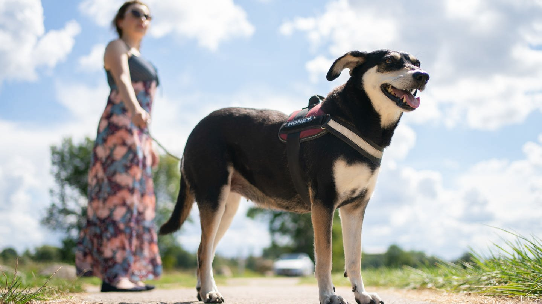 Frau mit Hund an der Leine (Foto: picture-alliance / Reportdienste, picture alliance/Nicolas Armer/dpa)