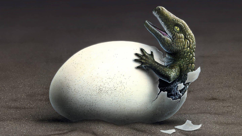 Ein Saurier schlüpft aus einem Ei (Foto: Imago, IMAGO / StockTrek Images)
