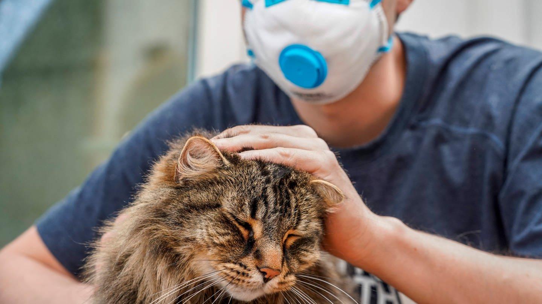 Auch Katzen können sich mit Coronaviren infizieren. Dass Katzen das Virus auch umgekehrt auf Menschen übertragen können, gilt nach aktuellem Stand als eher unwahrscheinlich. (Foto: Imago, imago images/ZUMA Wire)