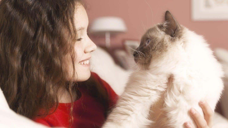 Wie verhalten sich Katzen gegenüber Menschen? (Foto: picture-alliance / Reportdienste, picture alliance / blickwinkel/McPHOTO/M. Gann)