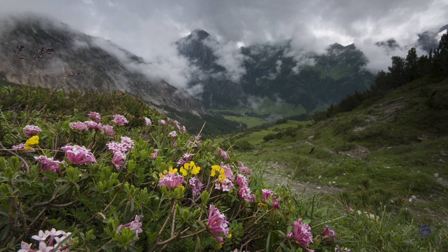 Blumen vor einem Bergpanorama in Liechtenstein (Foto: Imago, imago images / Nature Picture Library)