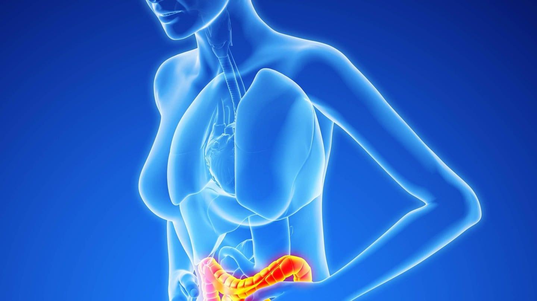 Bei Reizdarm ist das Nervensystem des Darms überreizt. (Foto: Imago, imago/Science Photo Library)