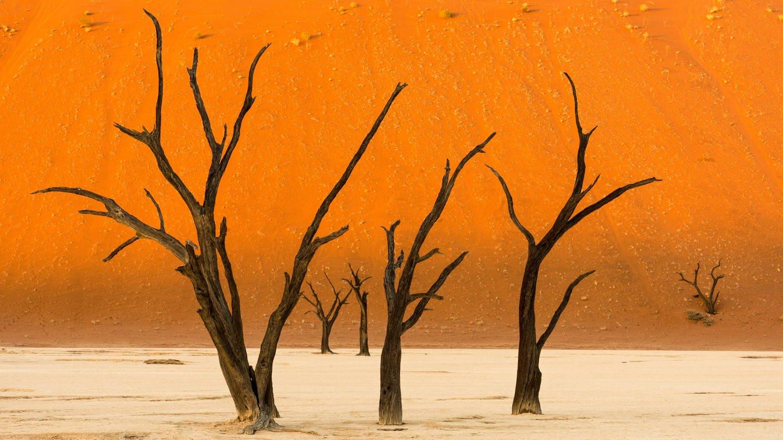 Namibische Wüste mit verdorrten Bäumen (Foto: Imago, Cavan Images via www.imago-images.de)