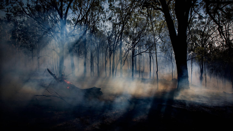 Verrauchter Wald nach Feuer (Foto: Imago, Cavan Images via www.imago-images.de)