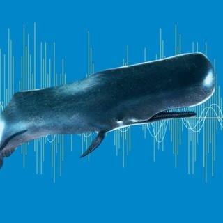 Ein Wal vor einem Frequenzband. (Foto: Imago, imago images/Science Photo Library)