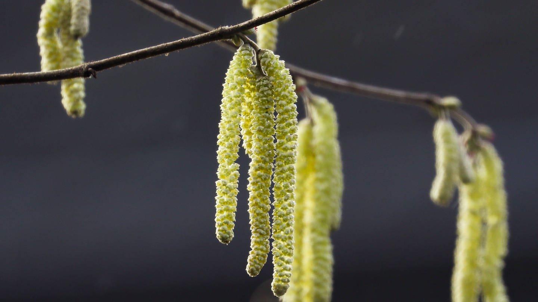 Pollen (Foto: Imago, imago images/localpic)