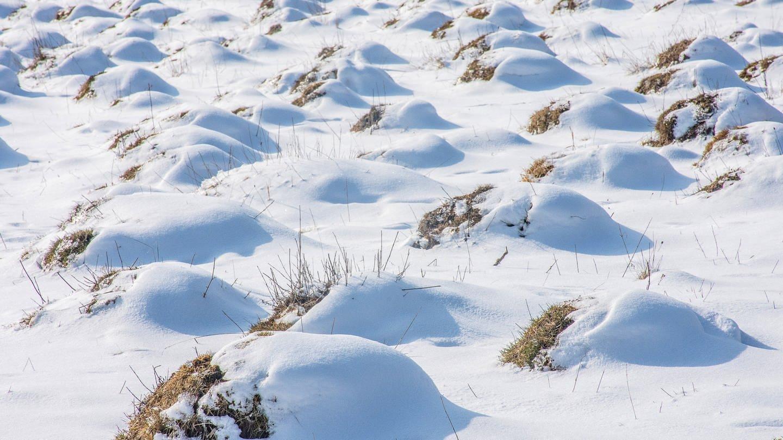 Ameisenstadt im Naturschutzgebiet Dellenhäule in Baden-Württemberg: Was machen Ameisen im Winter? (Foto: Imago, IMAGO / McPHOTO)