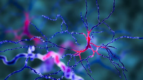 Neuronennetzwerk (Foto: Imago, IMAGO / Science Photo Library)