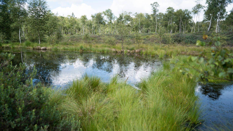 Renaturiertes Moor (Foto: Imago, imago images/ecomedia/robert fishman)
