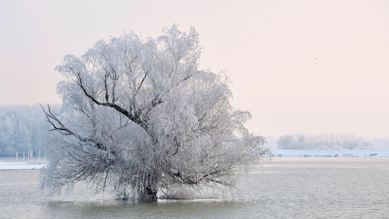 Mit Raureif besetzter Baum: Verschieben sich unsere Winter durch den Klimawandel nach hinten?